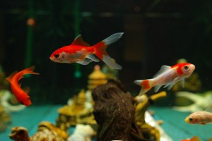 fish-235783