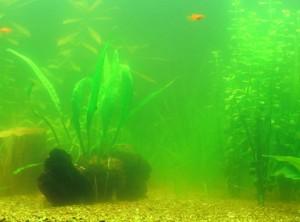 eau verte